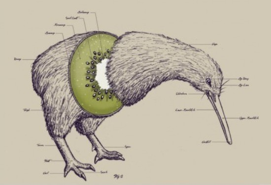 Kiwi-Bird-Or-Fruit